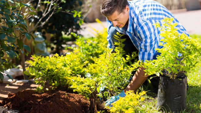 When it is the right time to prune your trees.